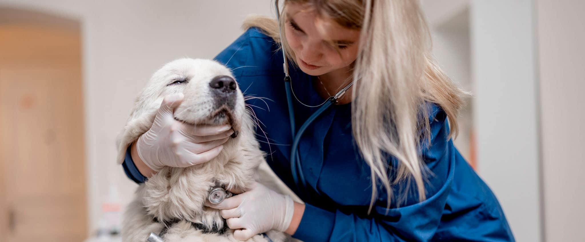 Oposiciones de veterinaria: cómo prepararlas y próximas convocatorias